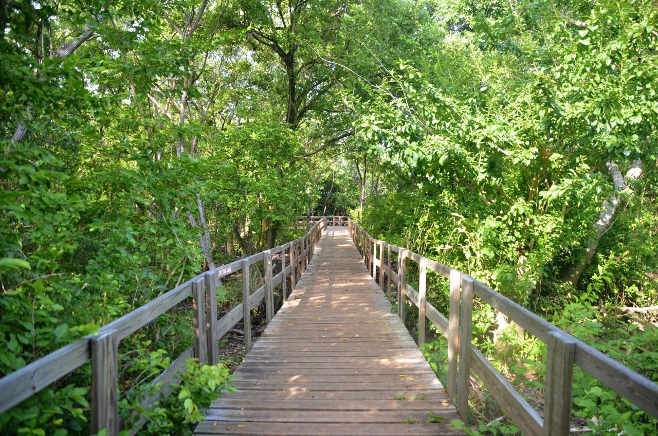 Old Point Mangrove Regional Park