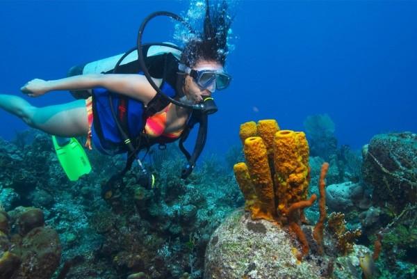 Buceo Scuba Diver