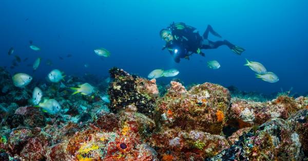 Buceo Especialidad Fish Identification