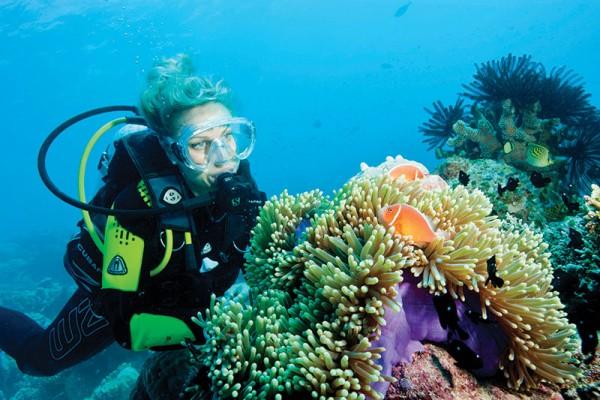 Buceo especialidad conservación de coral